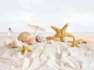Starfish-and-seashells-at-the-beach-recuerdos-de-mis-vacaciones-por-la-playa-de-arenas-blancas